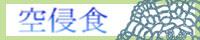 小説/ファンタジー